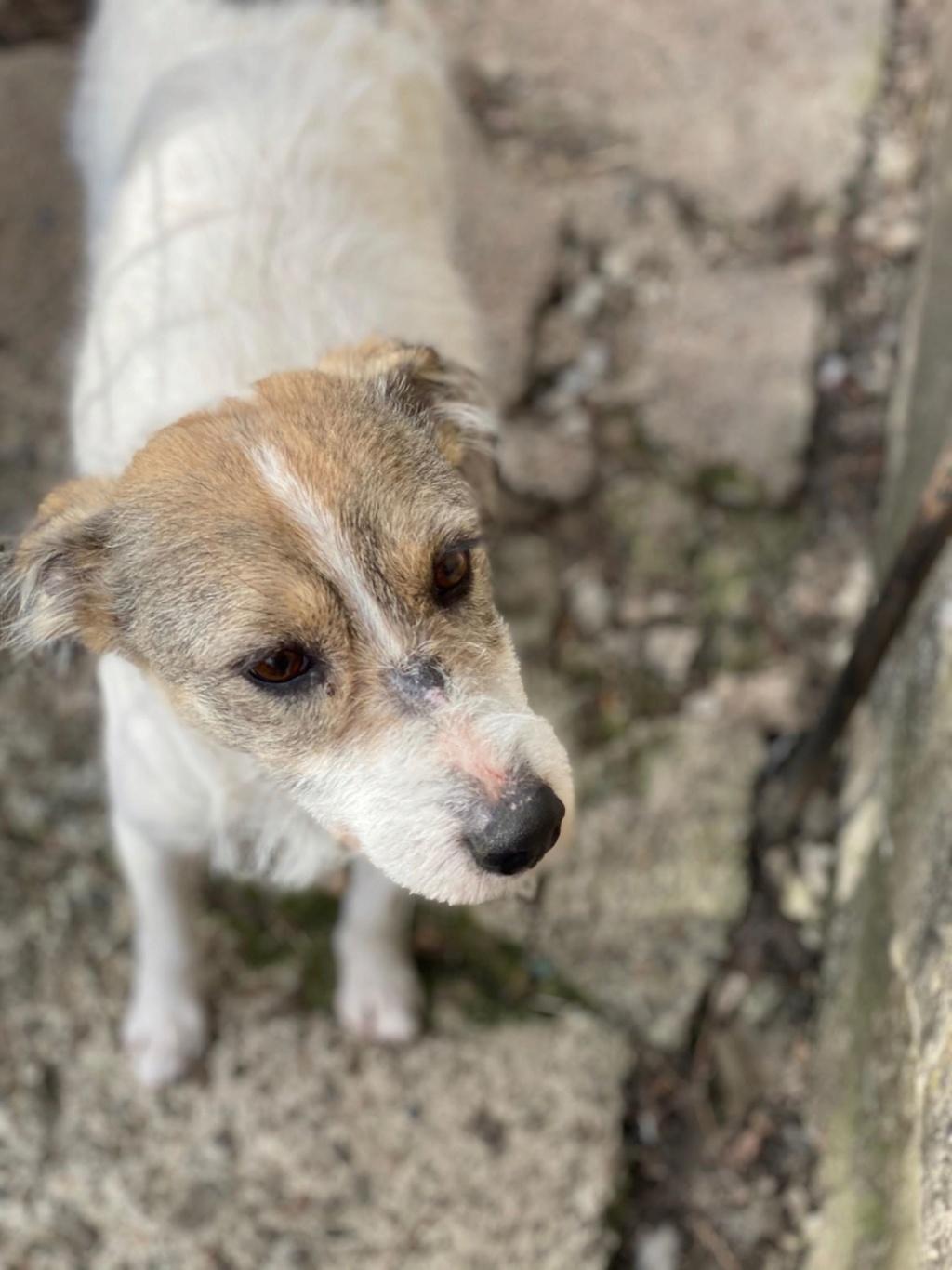 Orkane- femelle- fourrière de Târgu Frumos - adoptée via Andreea Orkane10