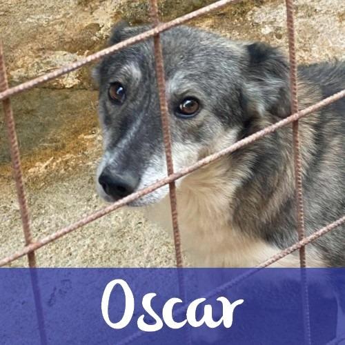 OscarM