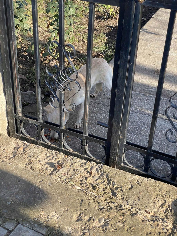 Oxford- mâle- fourrière de Târgu Frumos Oxford18