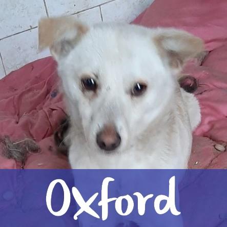 OxfordM
