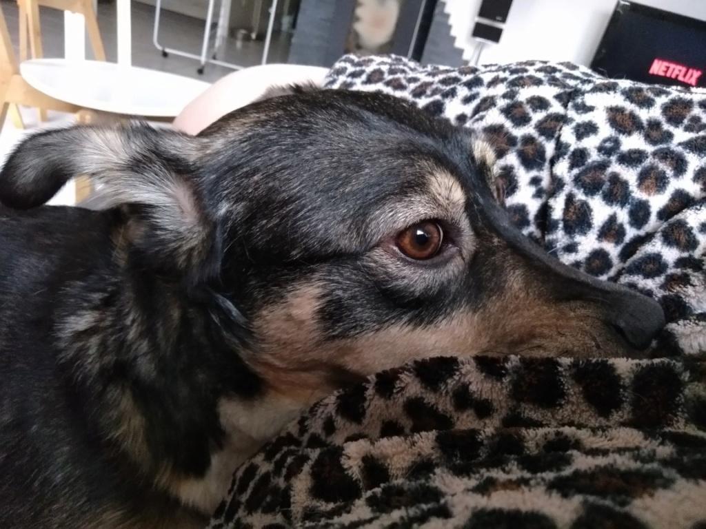 Gimli (ex-Jonny) - mâle - refuge de Târgu Frumos - réservé adoption (68) P_201810