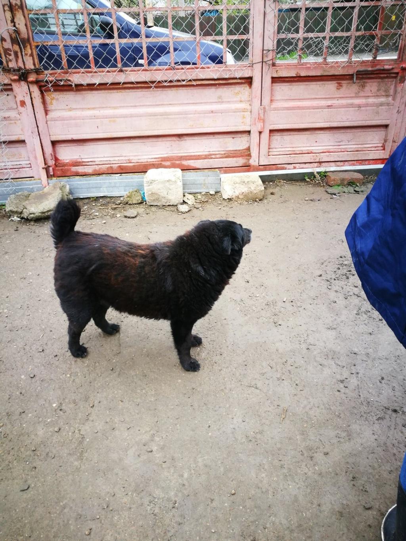 Pastel- femelle- à la fabrique à Targu Frumos - frais d'adoption réduit Paaste10