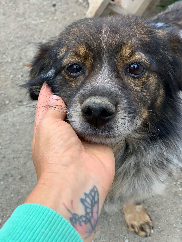 Pacman- mâle- fourrière de Târgu Frumos - Réservé adoption (21)  Pacman11
