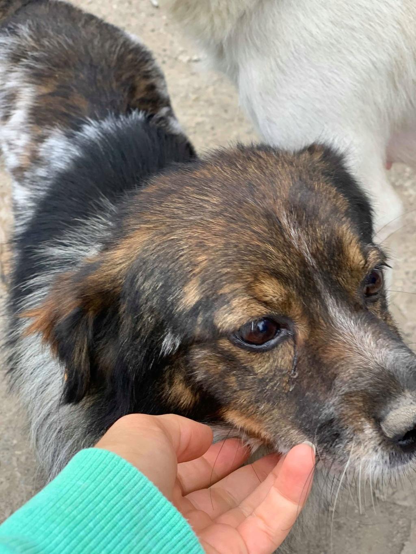 Pacman- mâle- fourrière de Târgu Frumos - Réservé adoption (21)  Pacman13