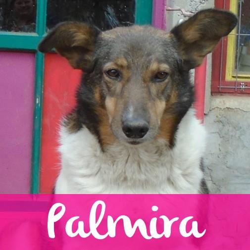 PalmiraF