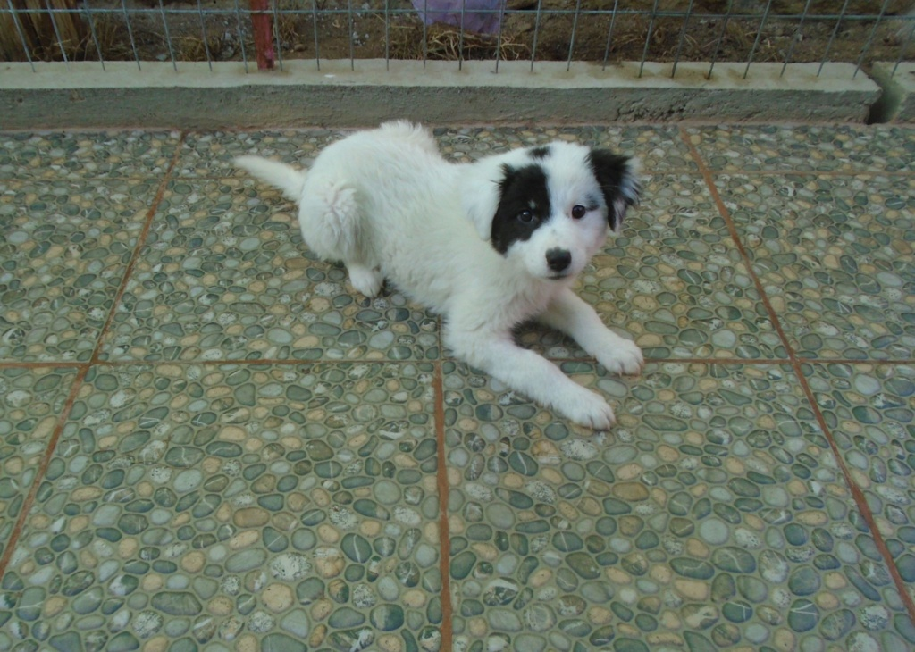 Emy (ex Paloma) - femelle- refuge d'Arad - Réservée adoption (67) Paloma15