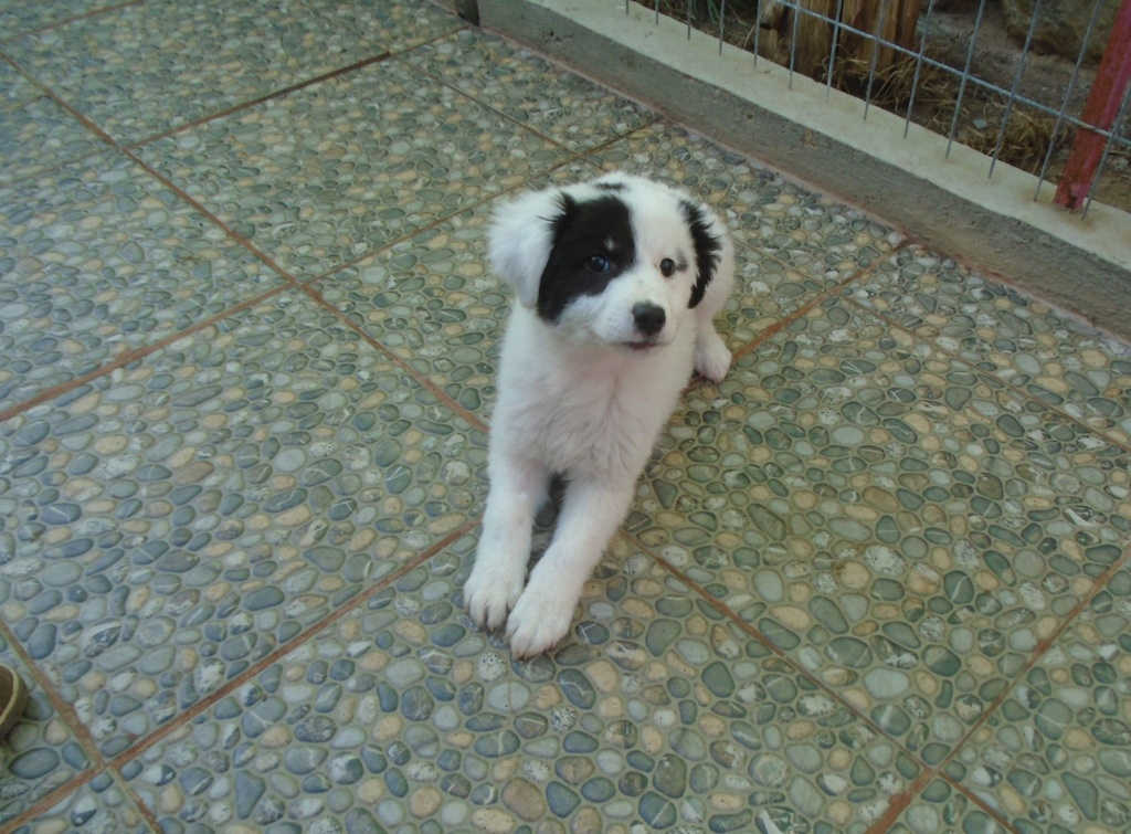 Emy (ex Paloma) - femelle- refuge d'Arad - Réservée adoption (67) Paloma17