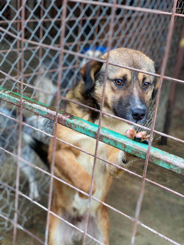 Peacky- mâle- refuge de Târgu Frumos - réservé adoption (67) Peacky10