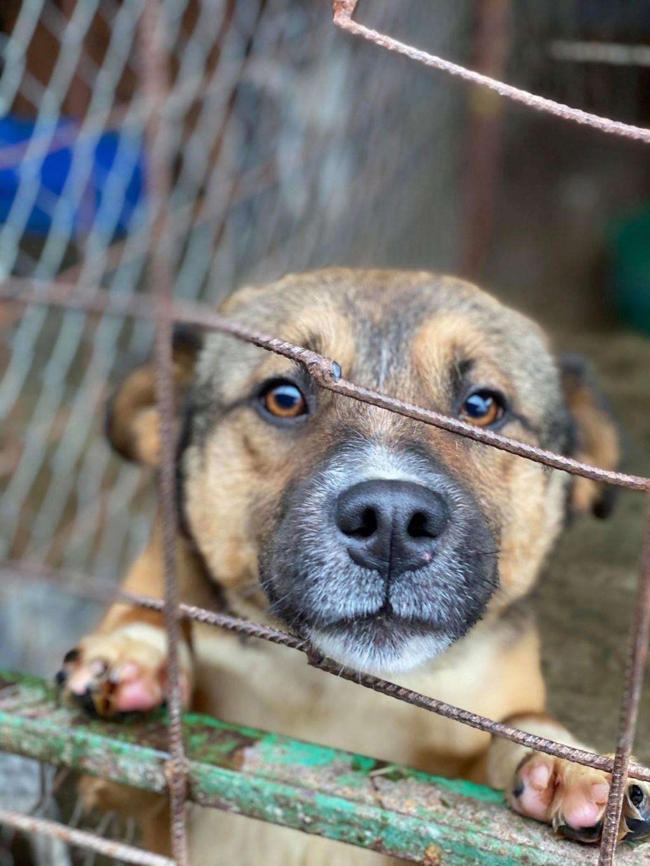 Peacky- mâle- refuge de Târgu Frumos - réservé adoption (67) Peacky11