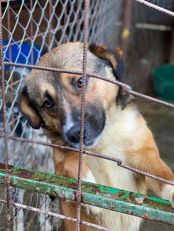Peacky- mâle- refuge de Târgu Frumos - réservé adoption (67) Peacky12
