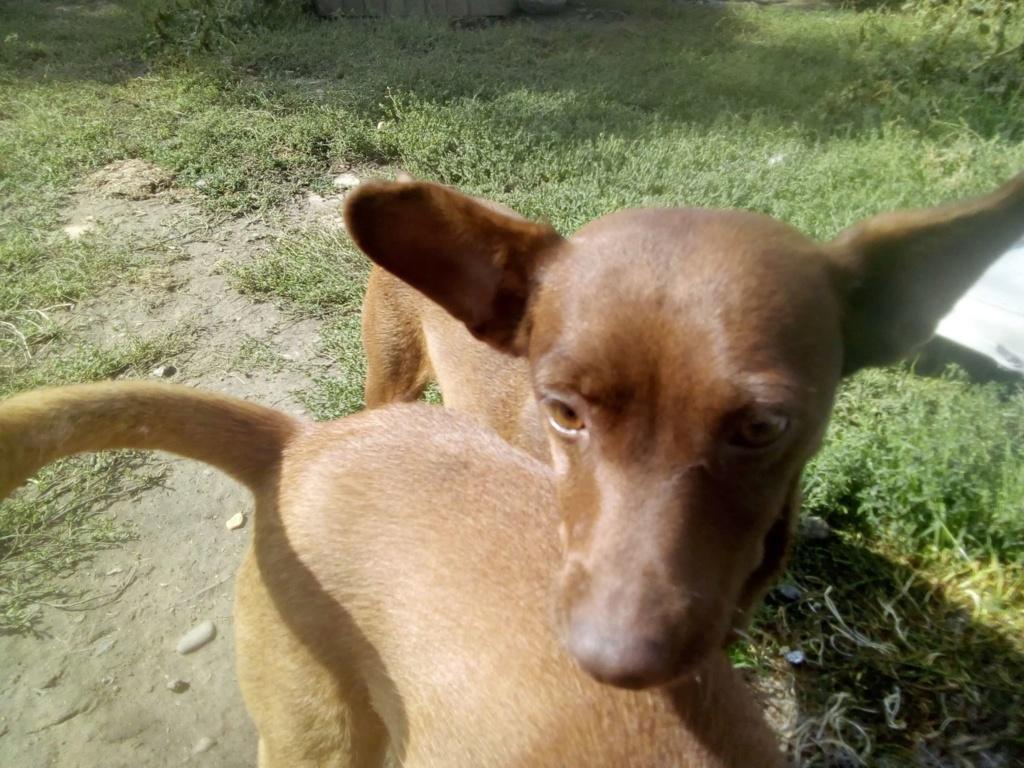Pelusa- femelle- fourrière de Târgu Frumos - sera en famille d'accueil dans le 78 Pelusa11
