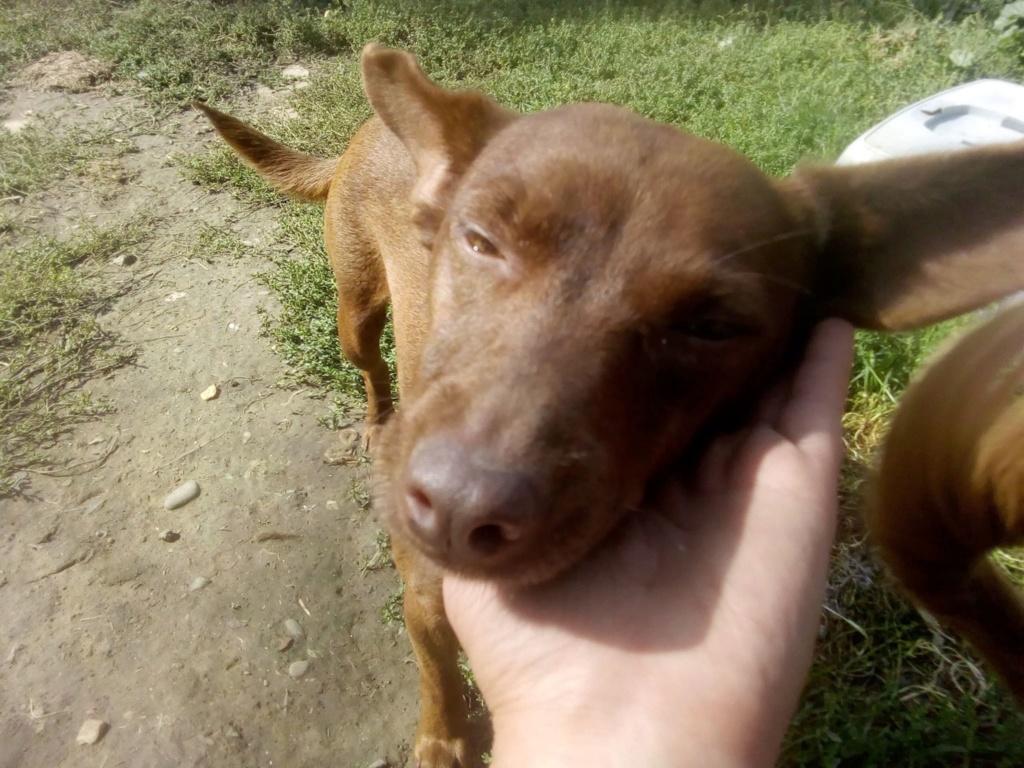 Pelusa- femelle- fourrière de Târgu Frumos - sera en famille d'accueil dans le 78 Pelusa12