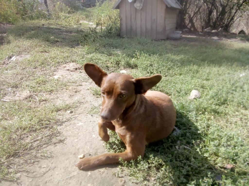 Pelusa- femelle- fourrière de Târgu Frumos - sera en famille d'accueil dans le 78 Pelusa13