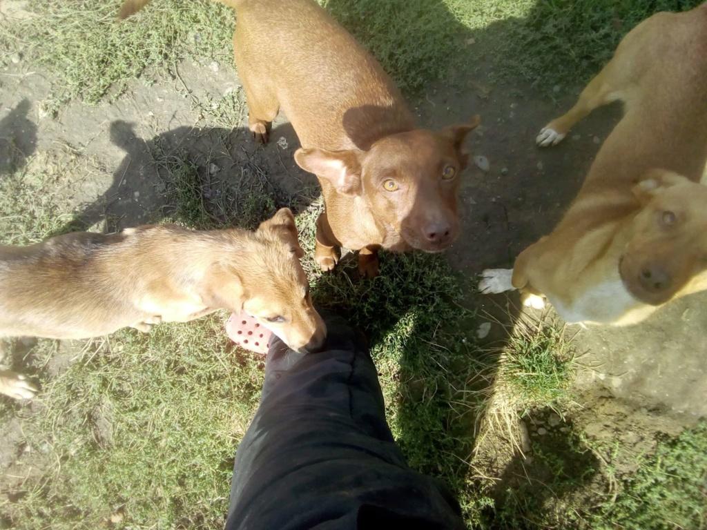 Pelusa- femelle- fourrière de Târgu Frumos - sera en famille d'accueil dans le 78 Pelusa22