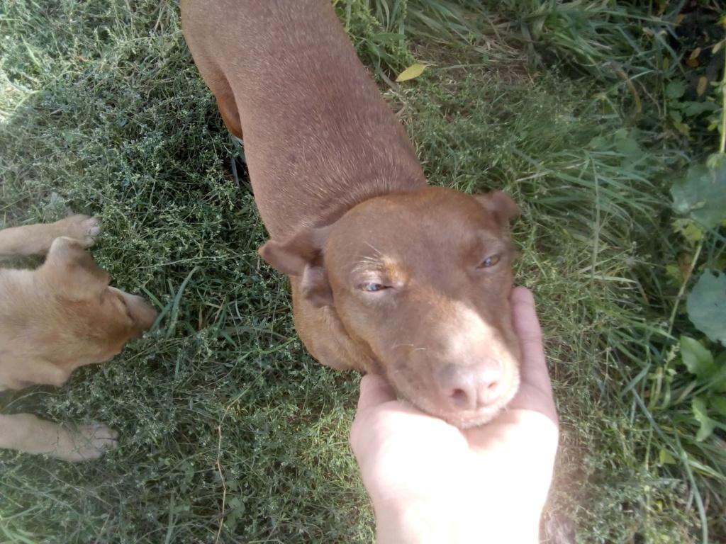 Pelusa- femelle- fourrière de Târgu Frumos - sera en famille d'accueil dans le 78 Pelusa26