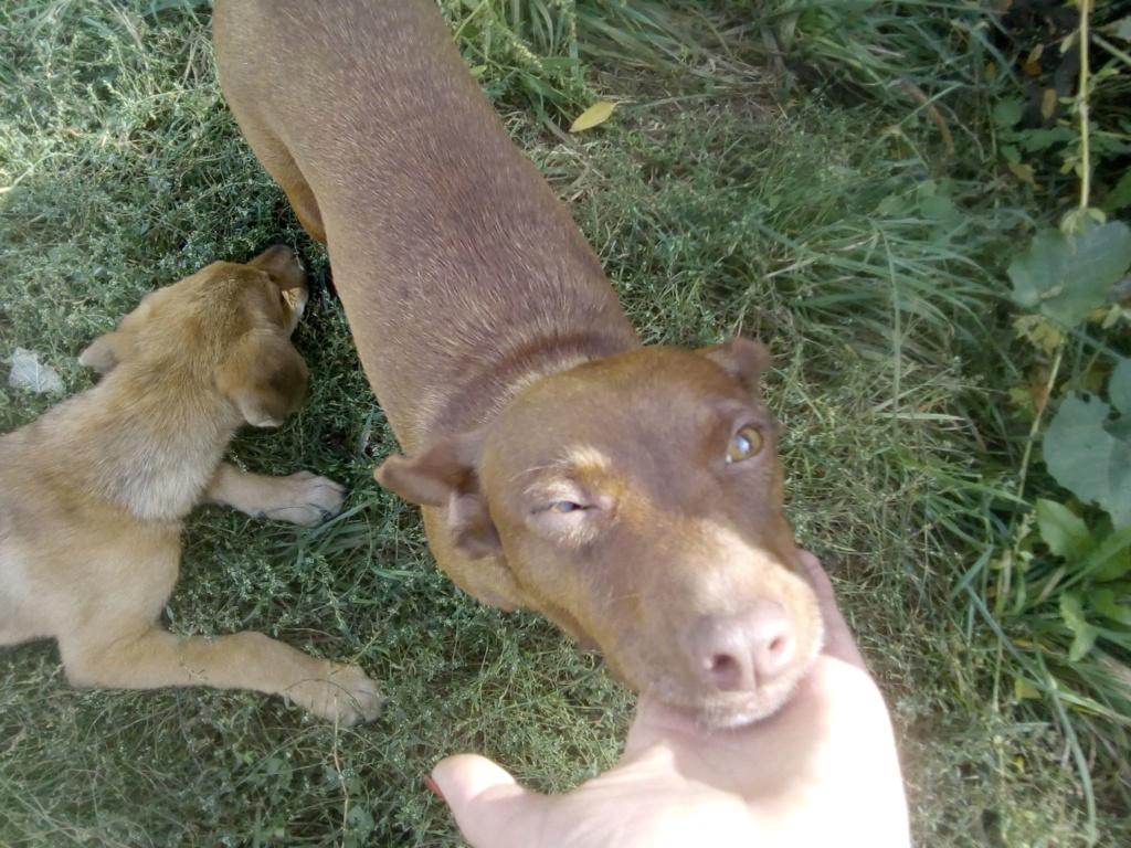 Pelusa- femelle- fourrière de Târgu Frumos - sera en famille d'accueil dans le 78 Pelusa27