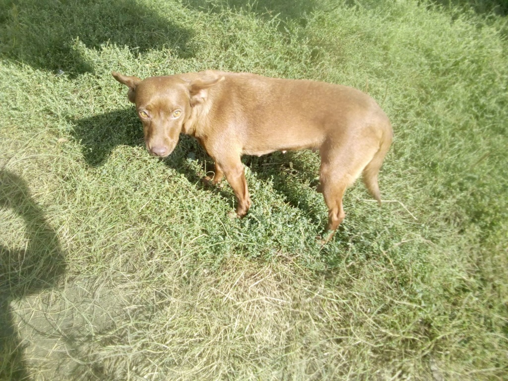 Pelusa- femelle- fourrière de Târgu Frumos - sera en famille d'accueil dans le 78 Pelusa28