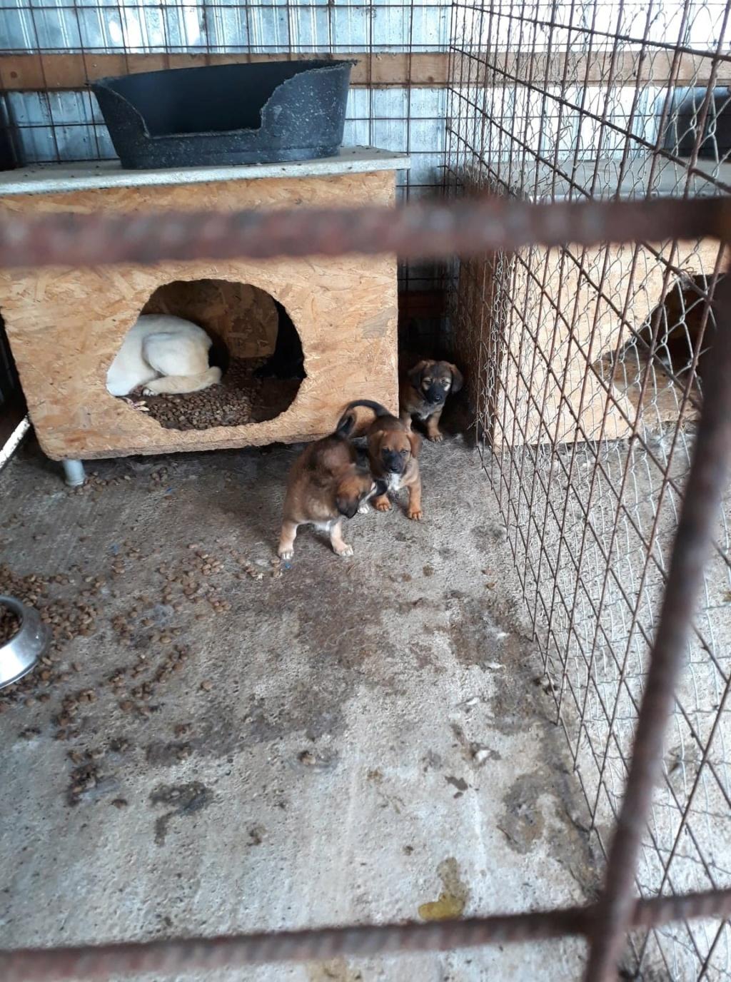 Nelson- mâle- fourrière de Târgu Frumos Pepito38