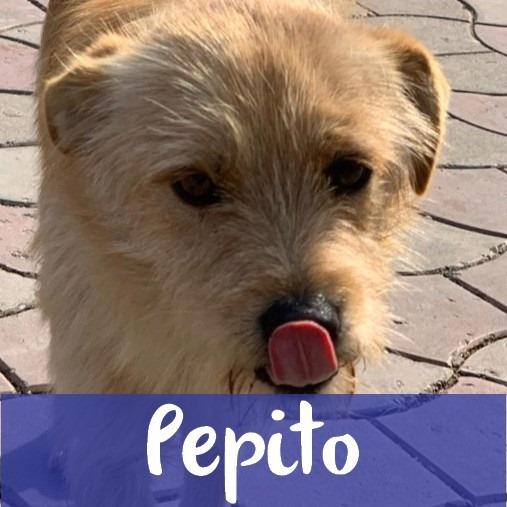 PepitoM