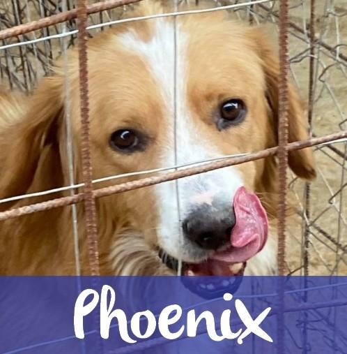 PhoenixM