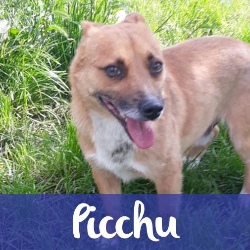 PicchuM