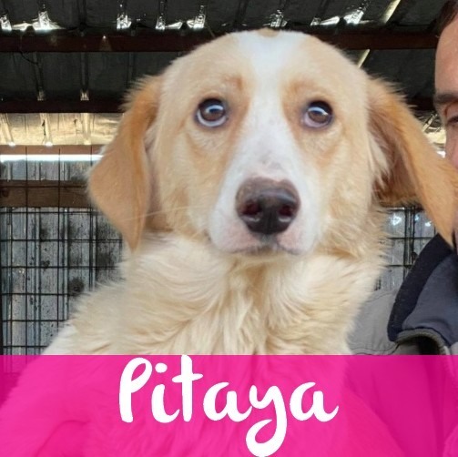 PitayaF