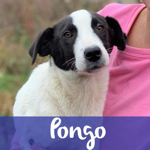 PongoM