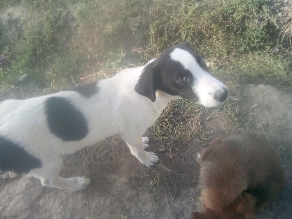 Pongo-mâle- fourrière de Târgu Frumos - adopté via Andreea Pongo_17