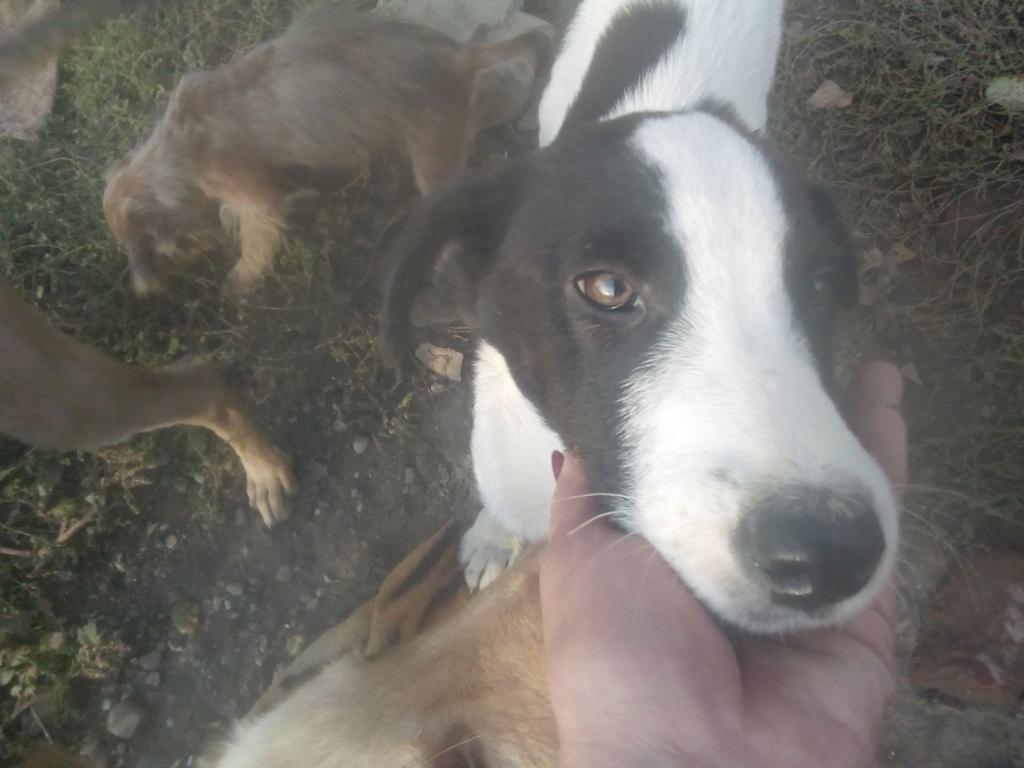 Pongo-mâle- fourrière de Târgu Frumos - adopté via Andreea Pongo_18