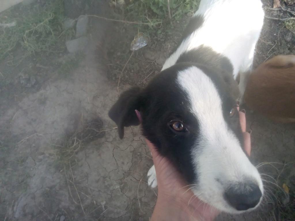 Pongo-mâle- fourrière de Târgu Frumos - adopté via Andreea Pongo_24