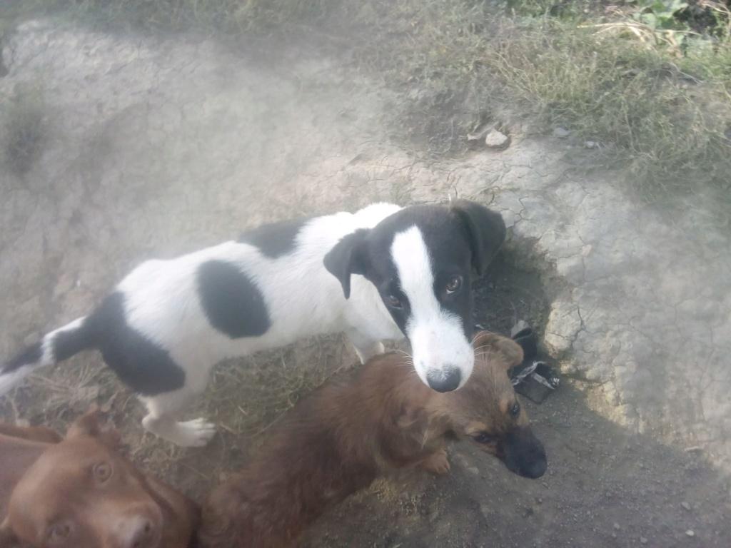 Pongo-mâle- fourrière de Târgu Frumos - adopté via Andreea Pongo_25