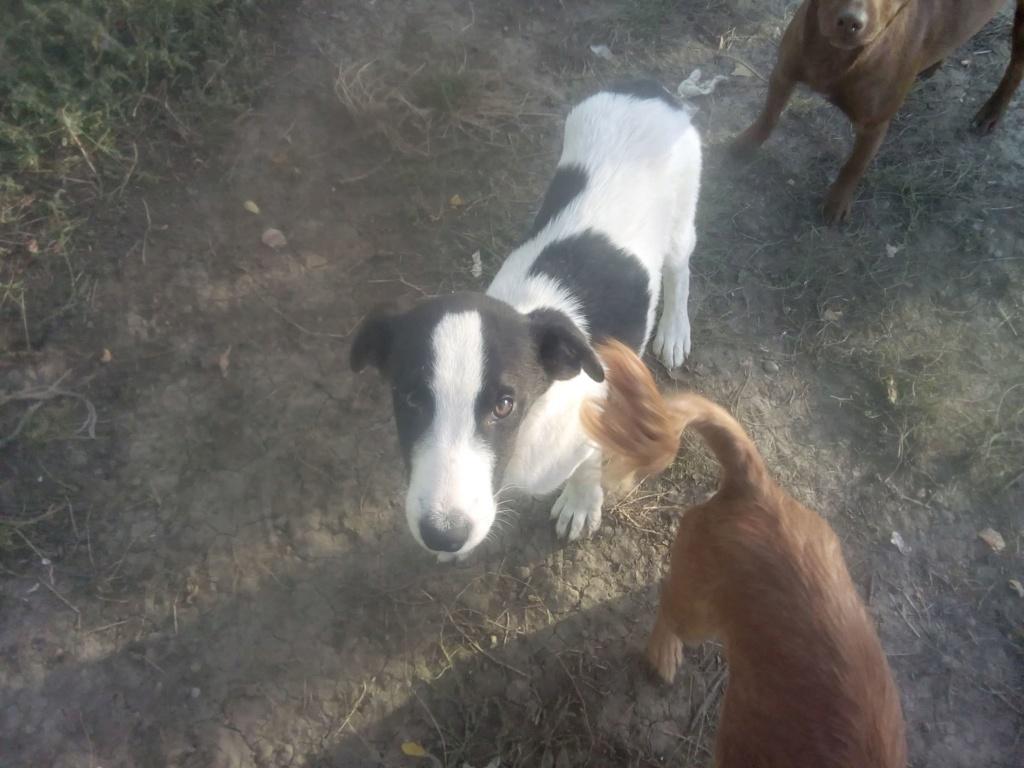Pongo-mâle- fourrière de Târgu Frumos - adopté via Andreea Pongo_29