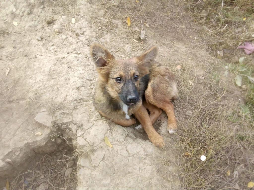 Prisca- femelle- refuge de Târgu Frumos - adoptée via Andreea Prisca11