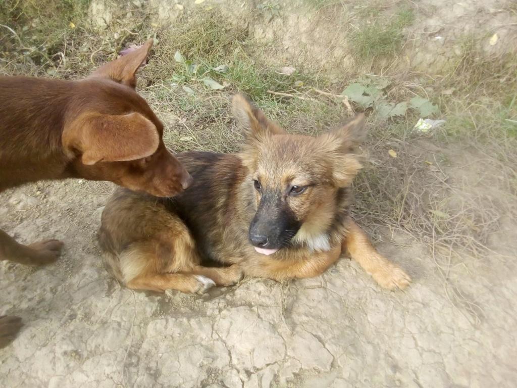 Prisca- femelle- refuge de Târgu Frumos - adoptée via Andreea Prisca12