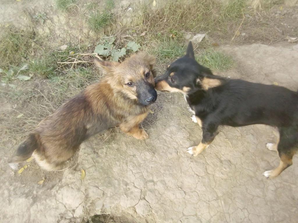Prisca- femelle- refuge de Târgu Frumos - adoptée via Andreea Prisca13