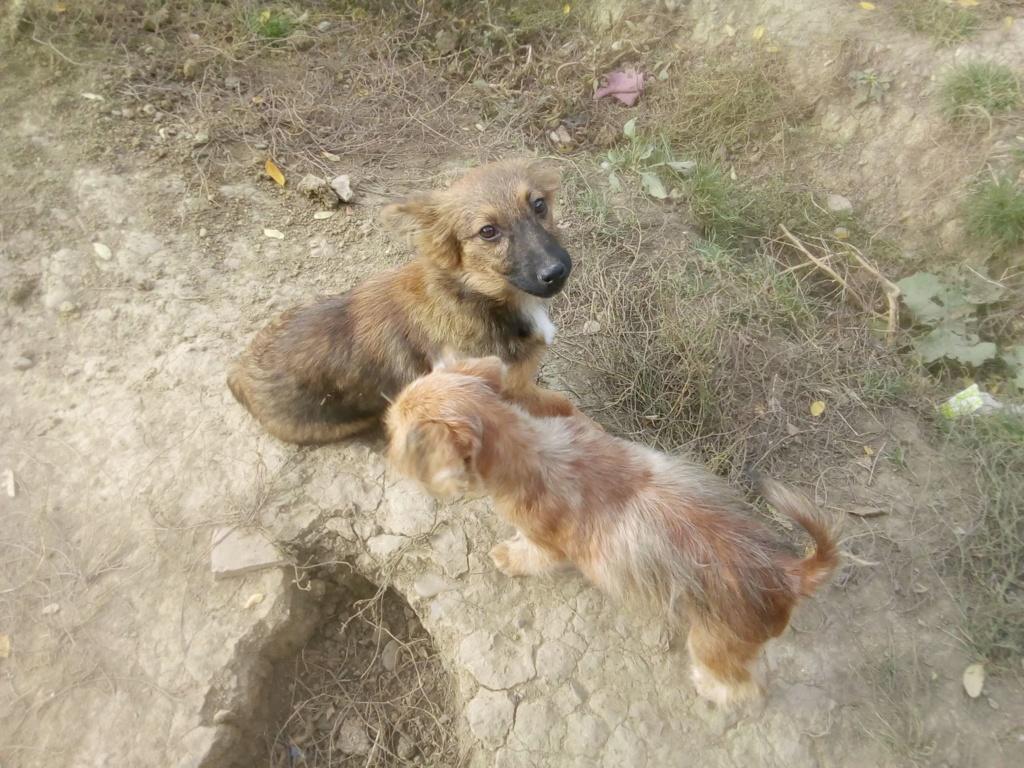 Prisca- femelle- refuge de Târgu Frumos - adoptée via Andreea Prisca14