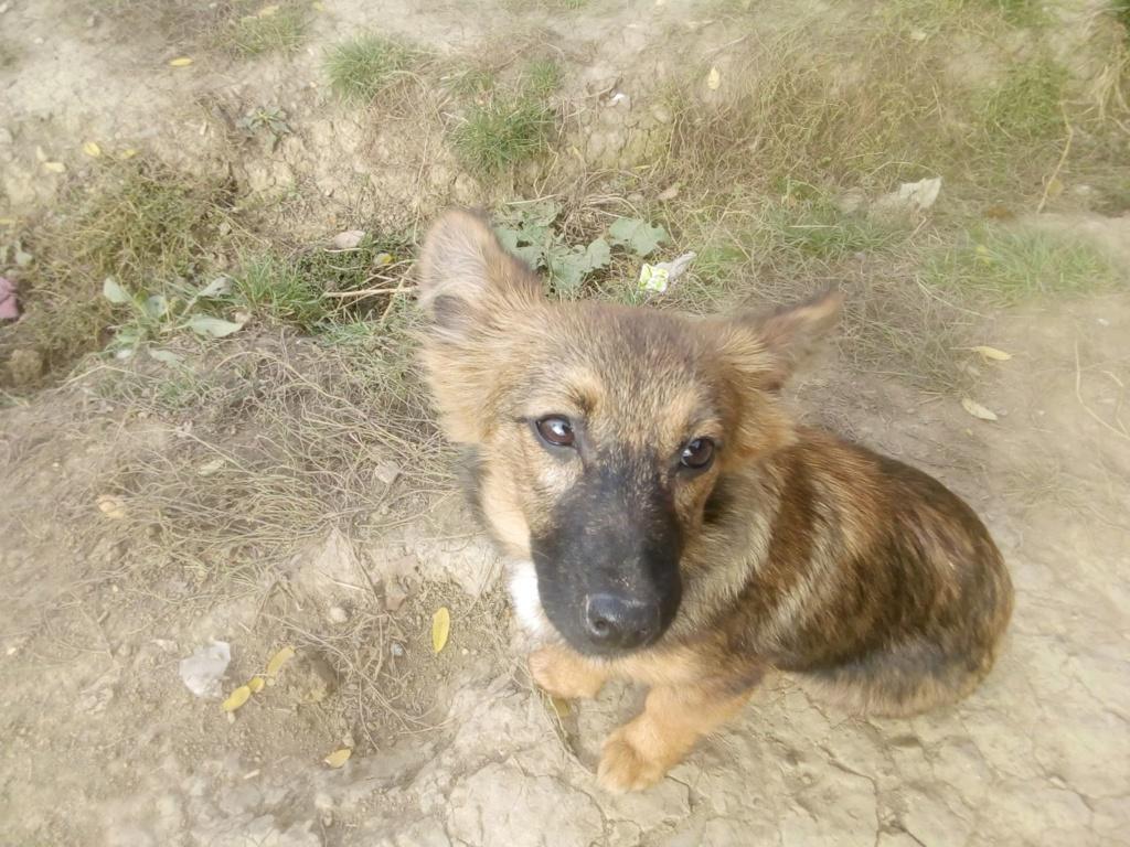 Prisca- femelle- refuge de Târgu Frumos - adoptée via Andreea Prisca15