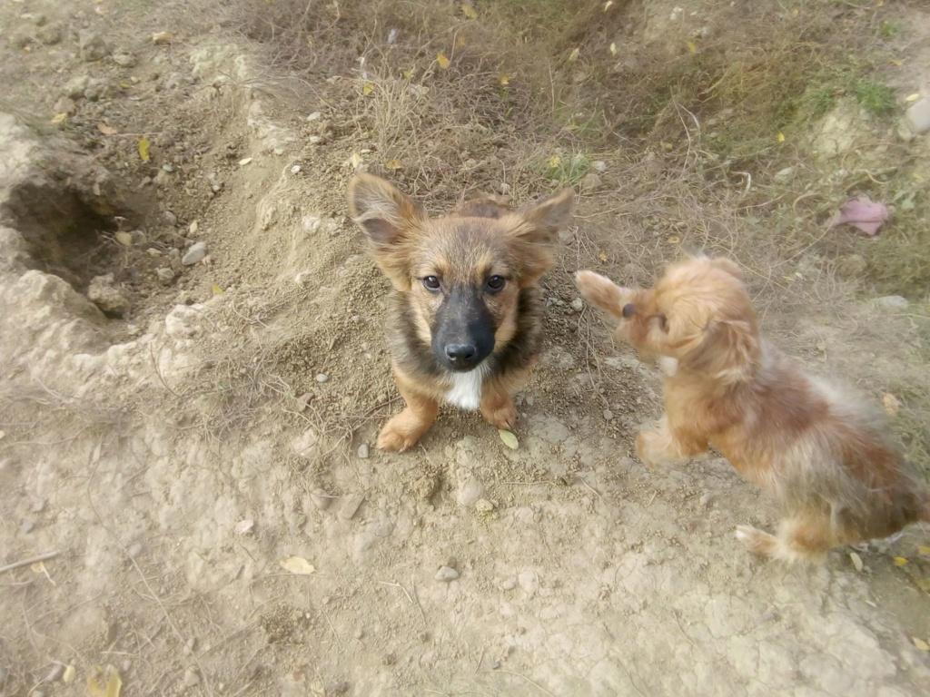 Prisca- femelle- refuge de Târgu Frumos - adoptée via Andreea Prisca16