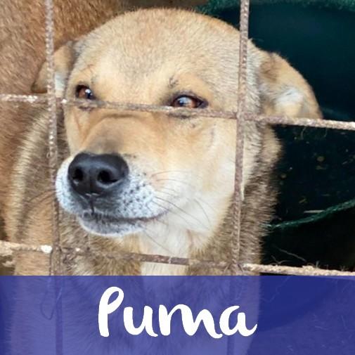 PumaM