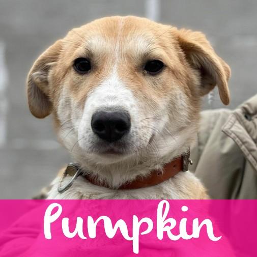 PumpkinF
