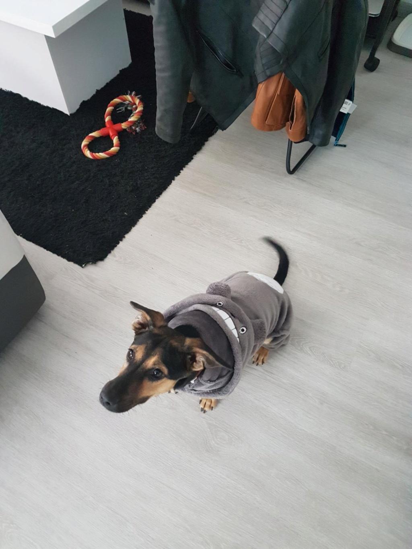 Etna - femelle - chez Andreea (Târgu Frumos) - reservé adoption 67 Resize10