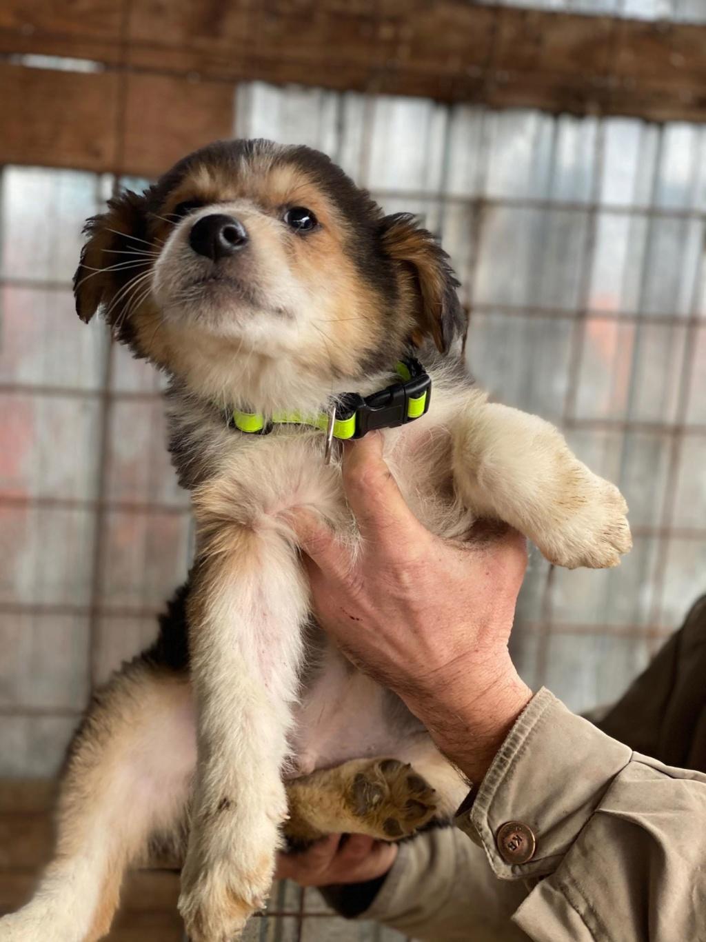 Rexx- mâle- fourrière de Târgu Frumos - réservé adoption (67) Rex_1010