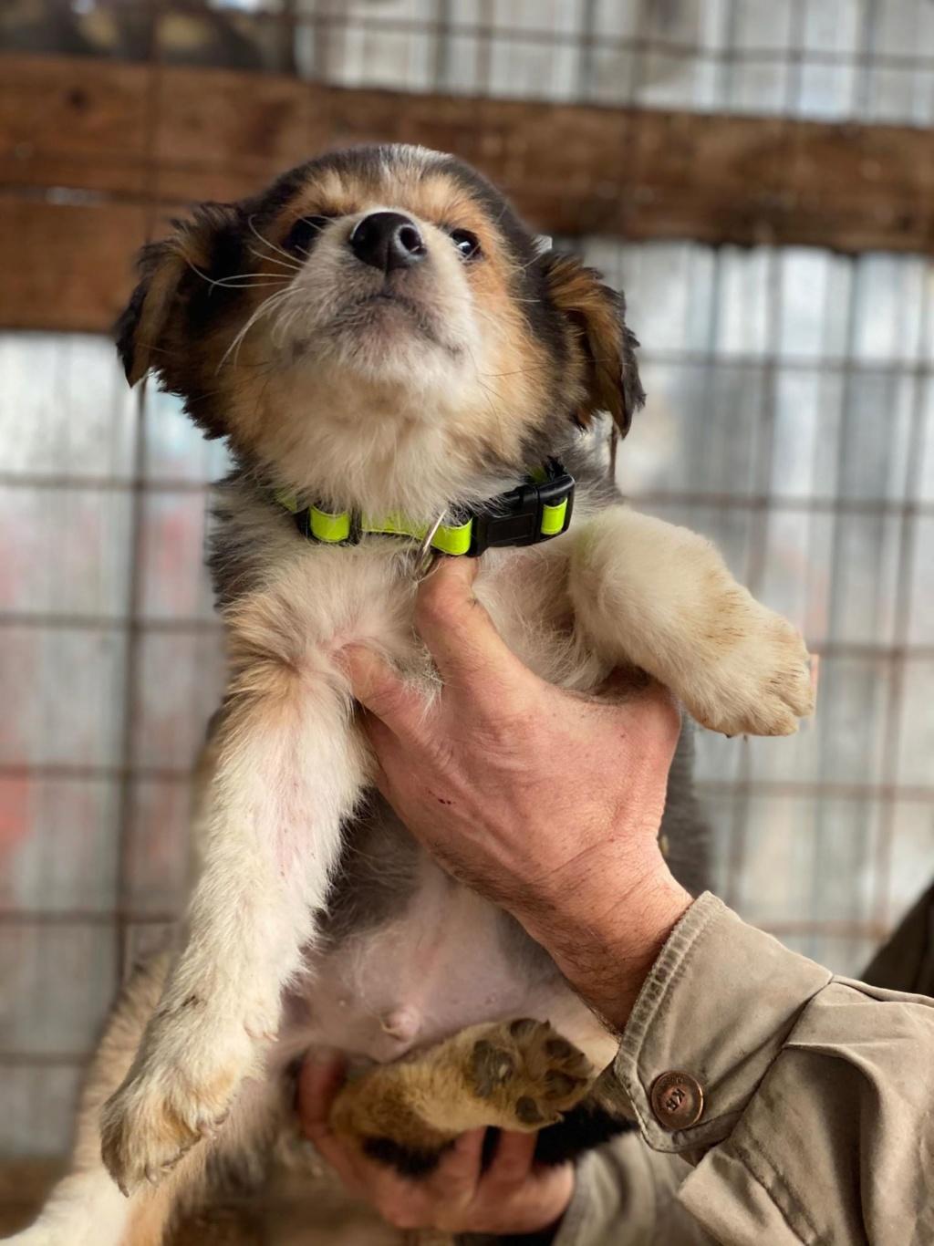 Rexx- mâle- fourrière de Târgu Frumos - réservé adoption (67) Rex_110