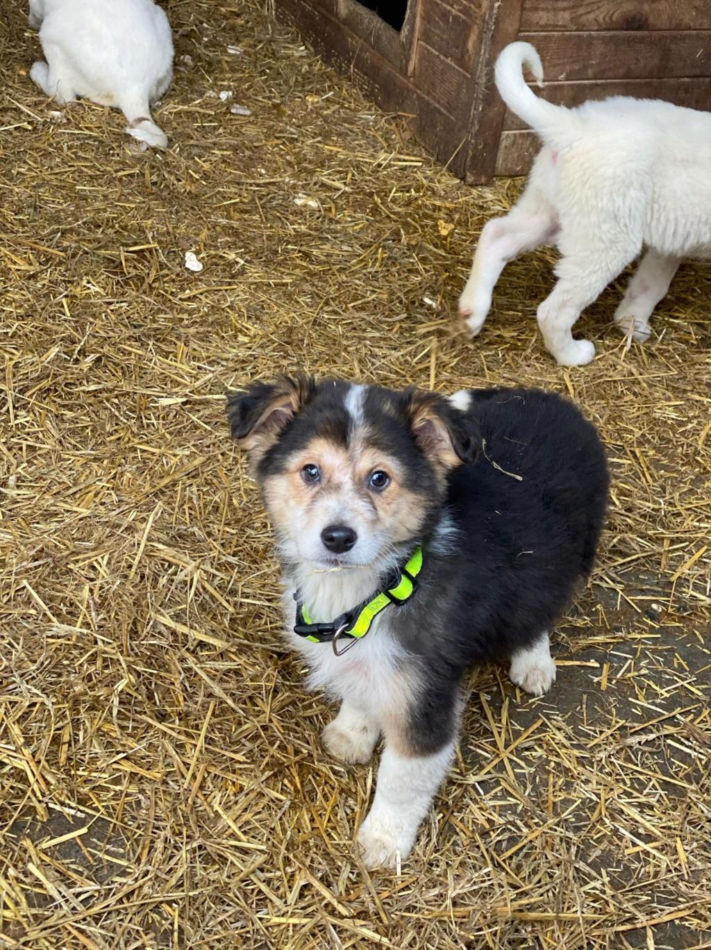 Rexx- mâle- fourrière de Târgu Frumos - réservé adoption (67) Rex_1110