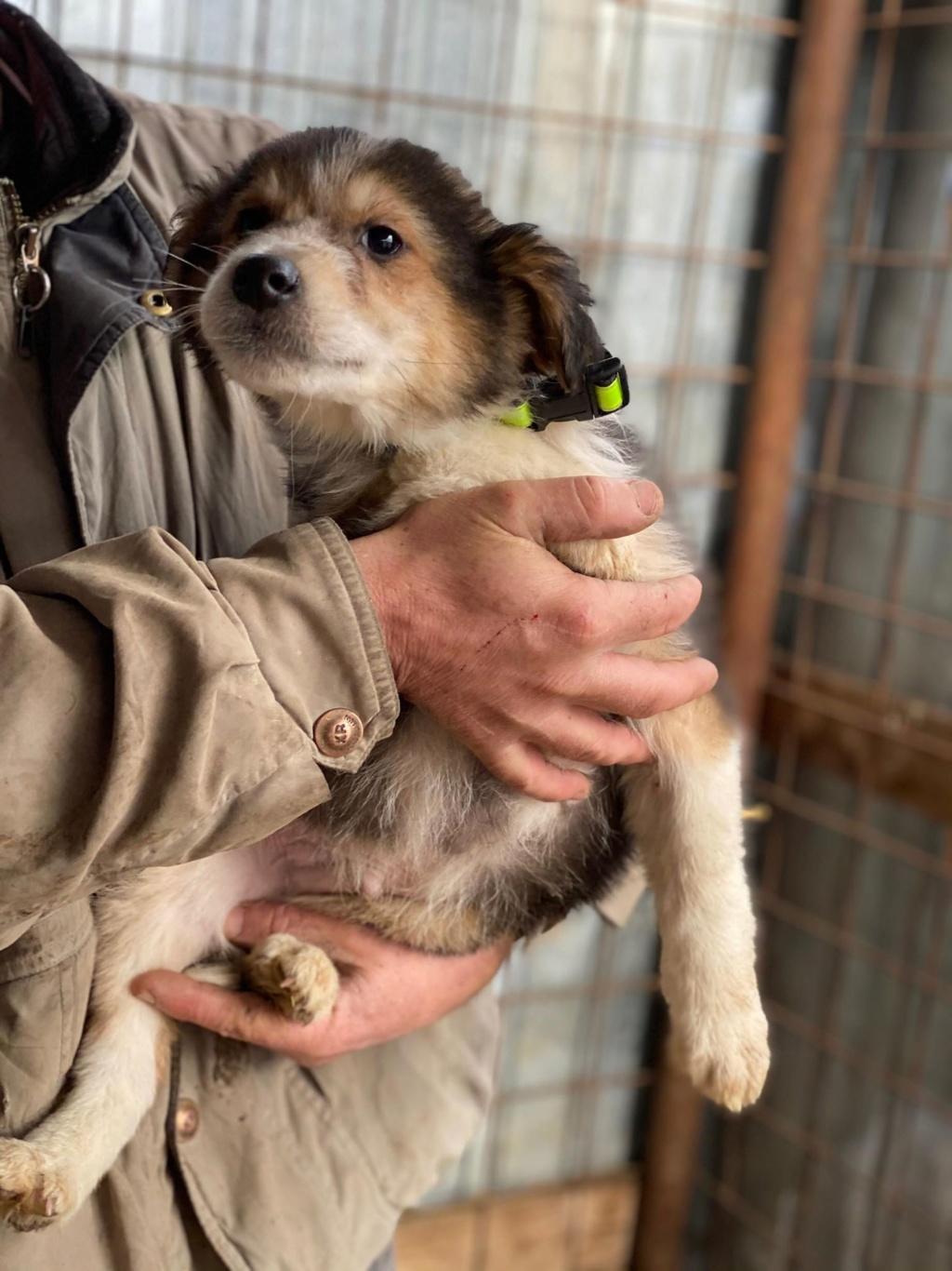 Rexx- mâle- fourrière de Târgu Frumos - réservé adoption (67) Rex_310