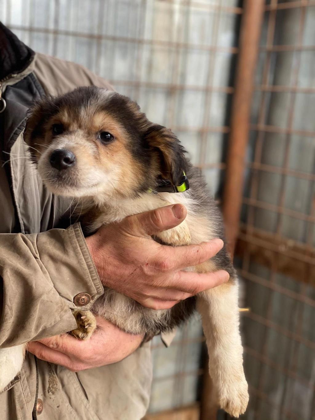 Rexx- mâle- fourrière de Târgu Frumos - réservé adoption (67) Rex_510