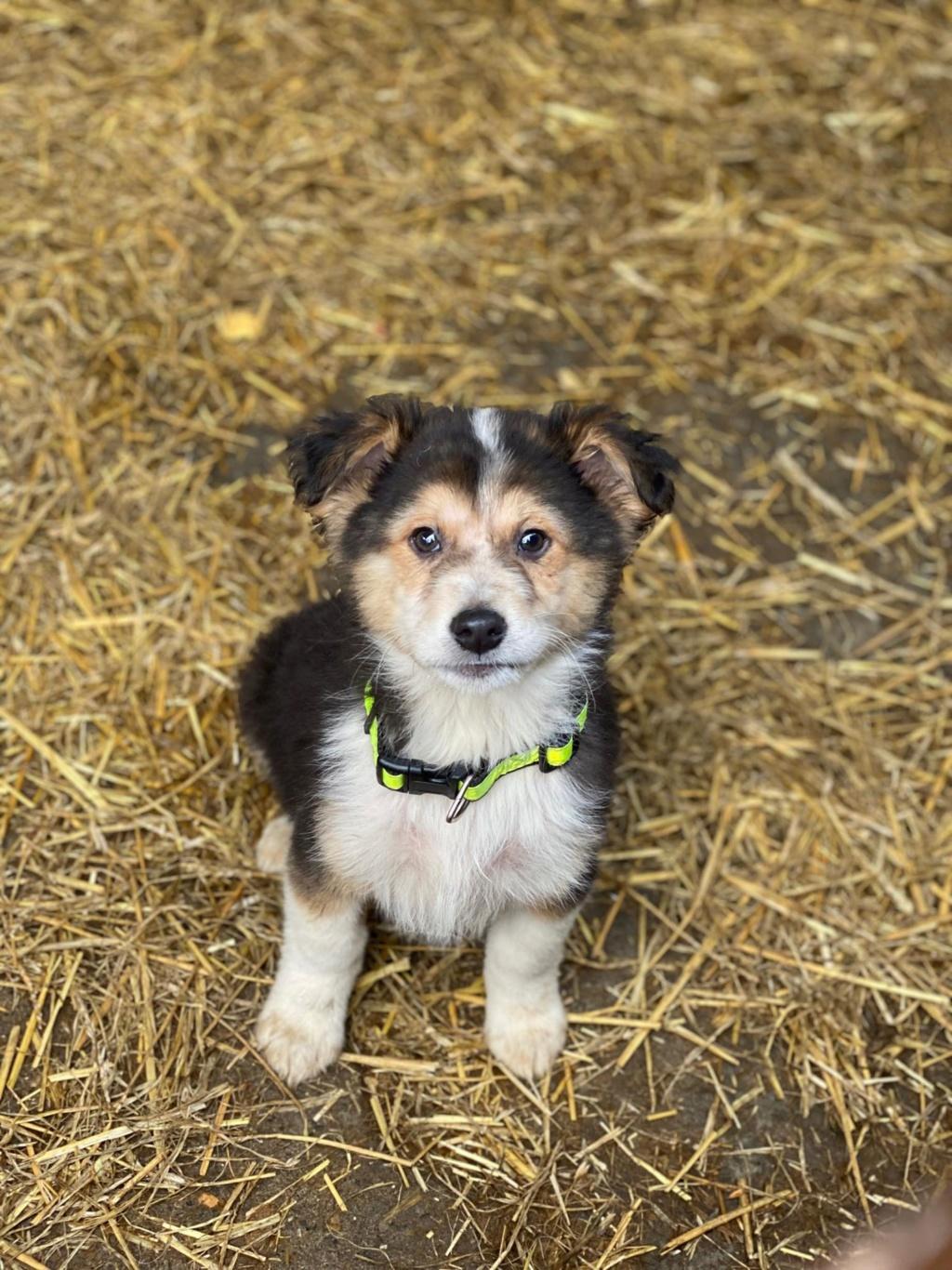 Rexx- mâle- fourrière de Târgu Frumos - réservé adoption (67) Rex_710