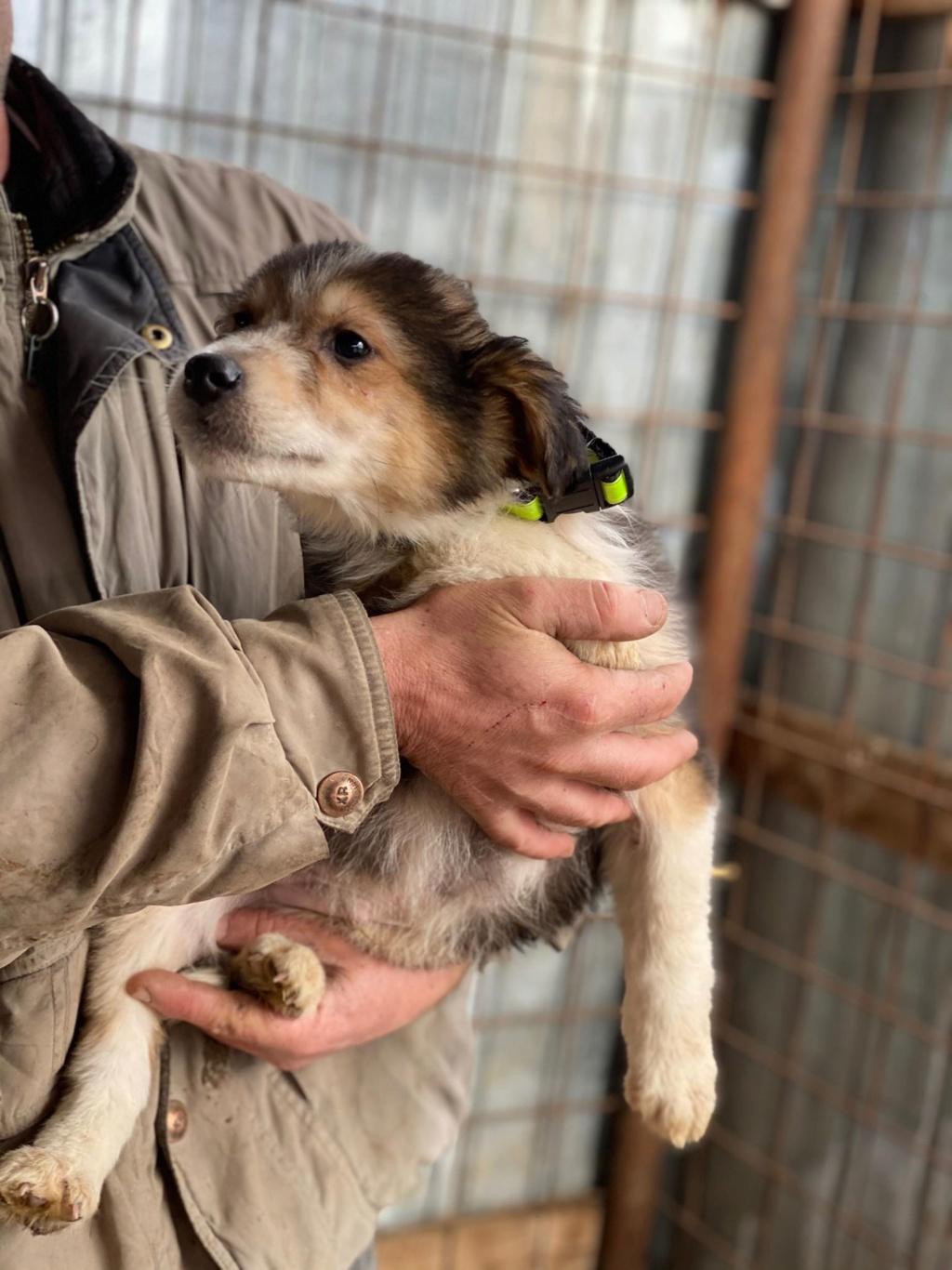 Rexx- mâle- fourrière de Târgu Frumos - réservé adoption (67) Rex_810