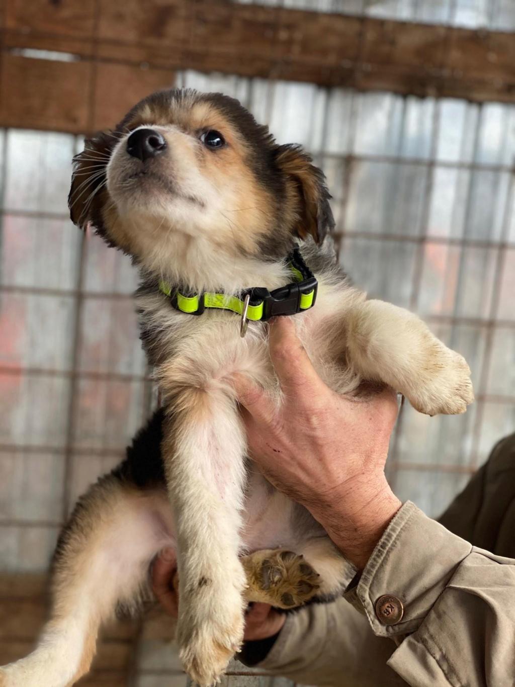 Rexx- mâle- fourrière de Târgu Frumos - réservé adoption (67) Rex_910