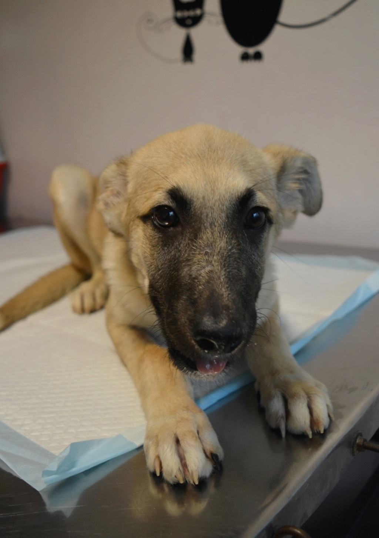 Rianna- femelle- fourrière de Târgu Frumos - sera en famille d'accueil dans le 67 en octobre Ria_310